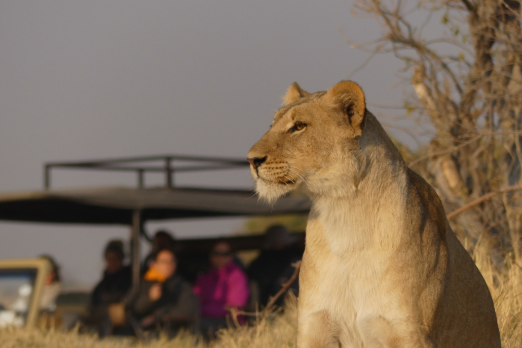 Luxury Mobile Safari Botswana